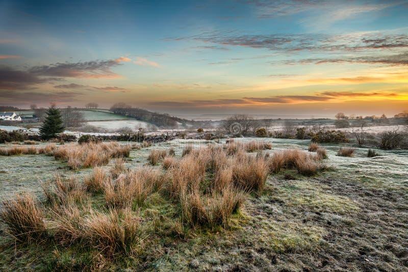 Frosty Sunrise in Bellever op Dartmoor stock foto's