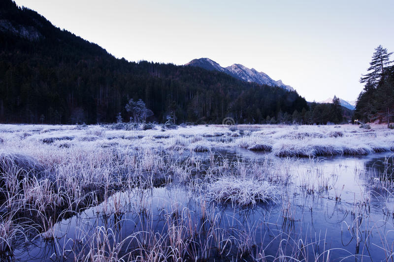 Download Frosty Swamp In Winter Scenery Stock Photo - Image of forest, cold: 23097432