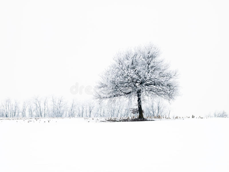 Download Frosty tree stock image. Image of branches, isolated - 12668781