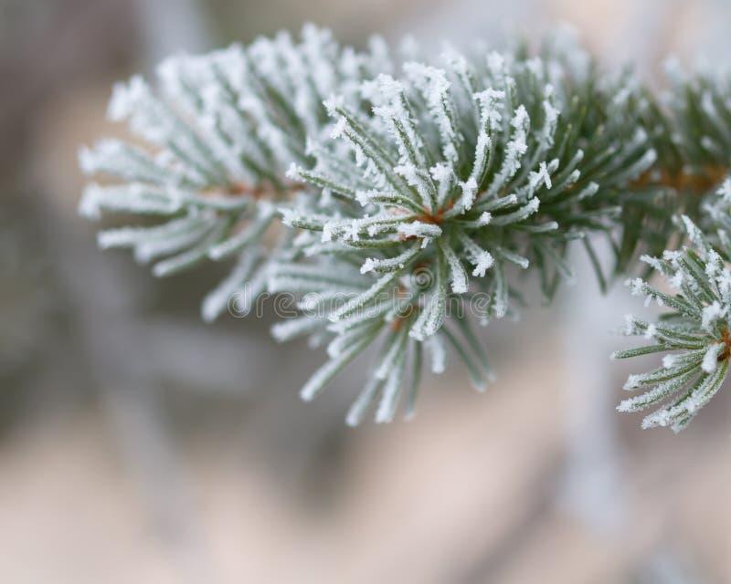Frosty tree stock photos