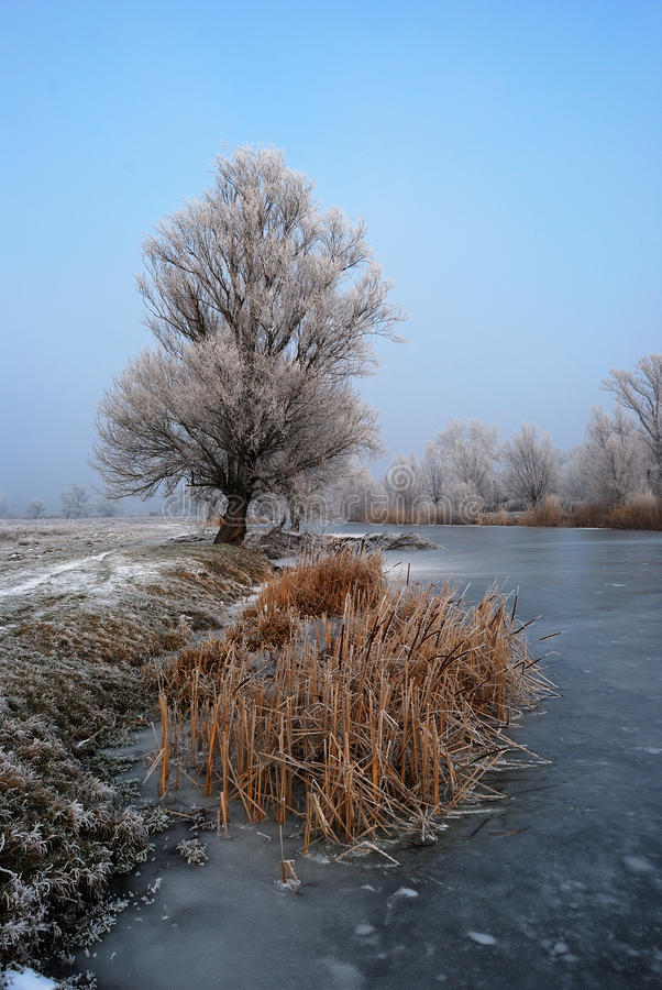 Frosty tree and backwater royalty free stock image