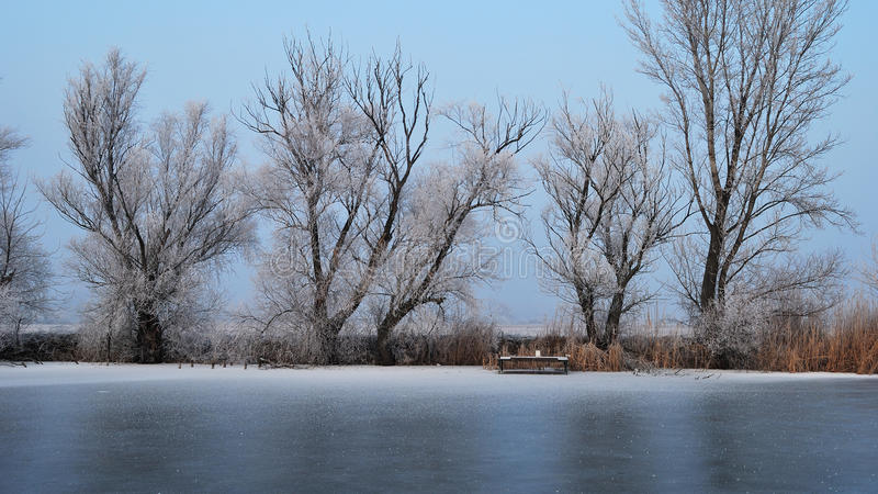 Frosty tree and backwater stock images