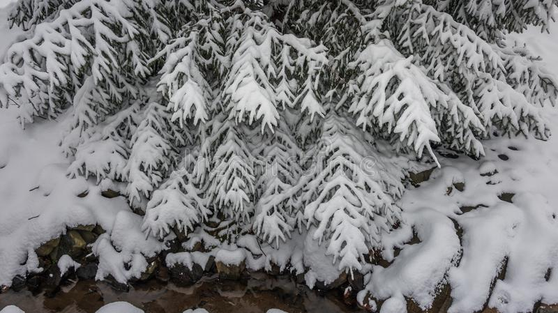 Download Frosty Tree Stock Photo - Image: 83711190