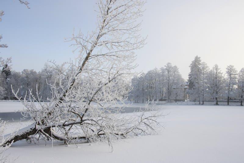 Frosty Tree On tombé un lac congelé en Scandinavie photo stock