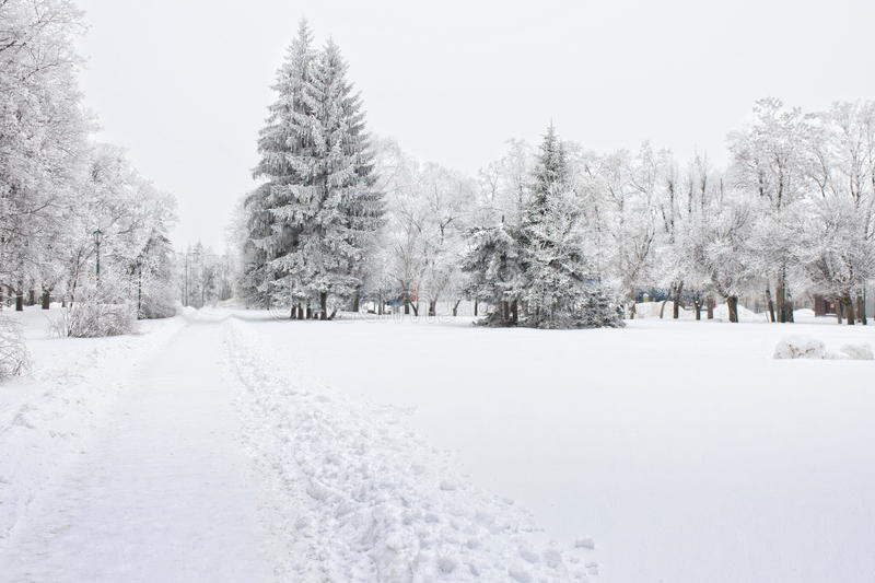 Frosty trees in the city in cold winter day royalty free stock image