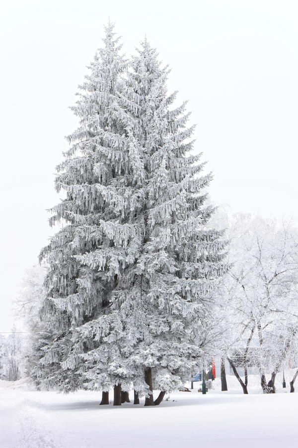 Frosty trees in the city in cold winter day stock images