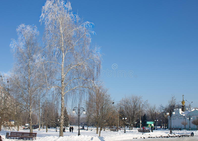 Frosty trees in the city in sunny winter day royalty free stock photo