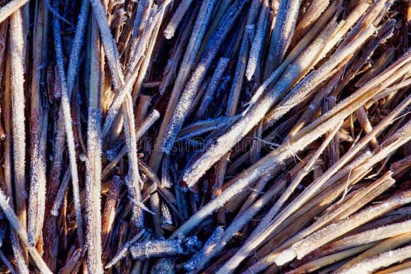 Frosty Twigs Background Cropped stockbild