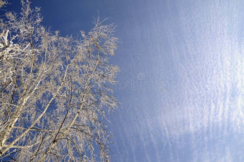 Frosty winter day stock photo