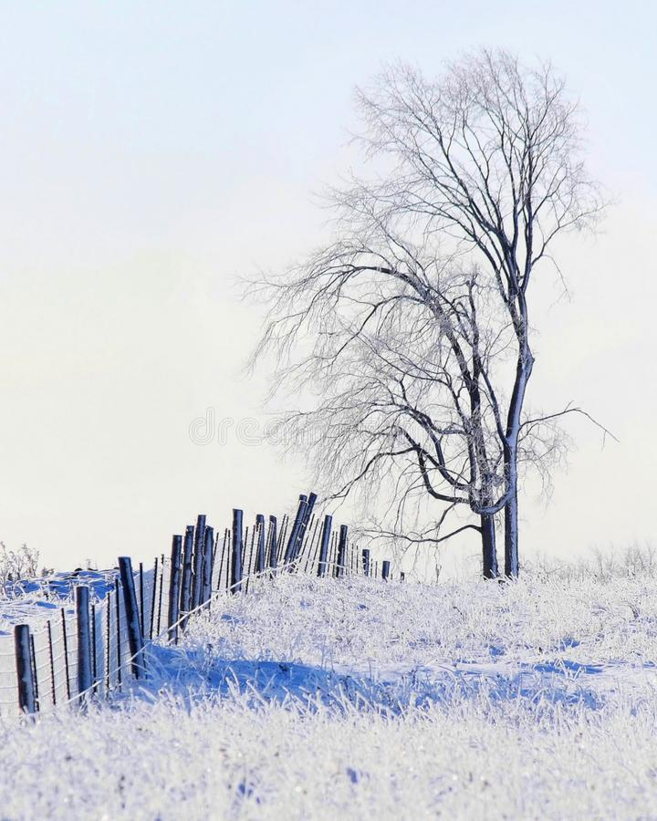 Frosty Winters Morn. Early morning hoar frost covers a finely detailed tree and fence line to give this rural winter scene a sketch like appearance royalty free stock photography