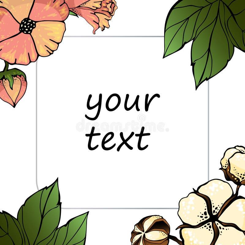 Frota de algodão isolada sobre fundo branco Elemento vetorial para o seu design Quadro floral Vintage para Guardar o Cartão de Da ilustração royalty free