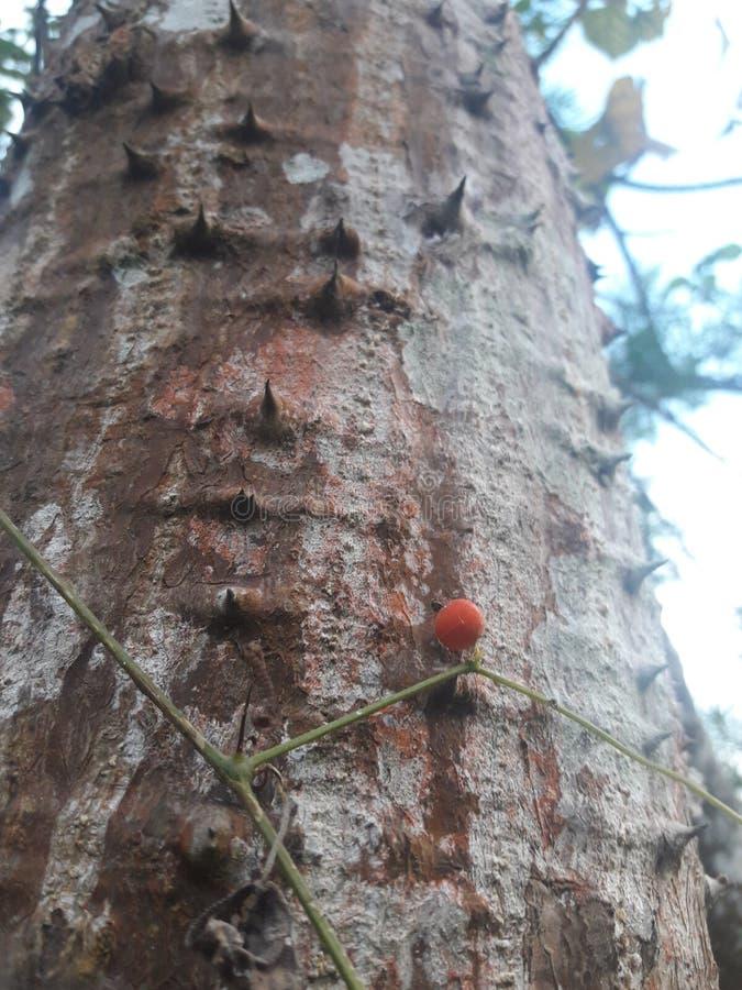 Frout rosso della foresta immagini stock libere da diritti
