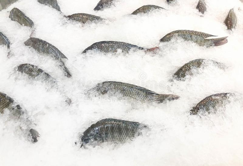 Frozen  ​​fish ready for sale at the market stock photography