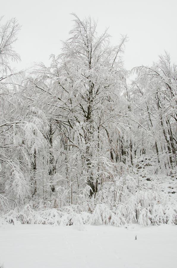 Download Frozen stock photo. Image of cold, snow, beautiful, zero - 28037496