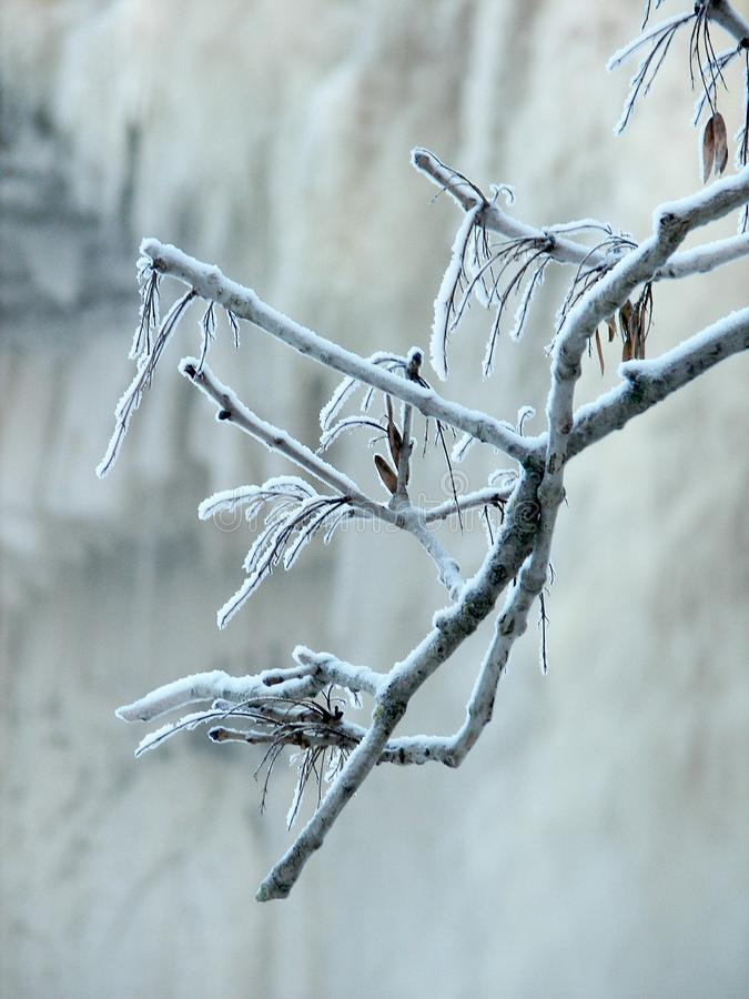 Download Frozen stock photo. Image of winter, january, tree, cold - 520624