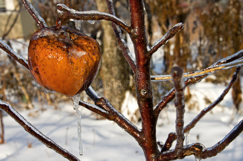 Download Frozen Apple stock image. Image of frozen, apple, tree - 36071249