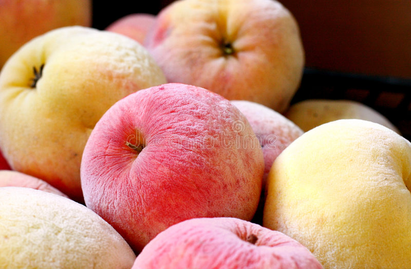 Frozen apples royalty free stock images