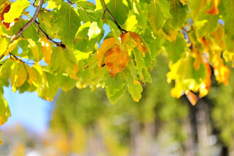 Frozen autumn leaves royalty free stock photo