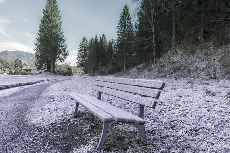 Frozen bench near forest stock photo. Image of trees ...