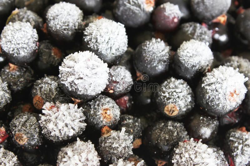 Frozen black currants royalty free stock photography