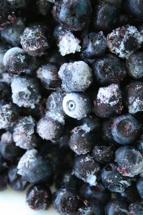 Frozen blueberries stock images