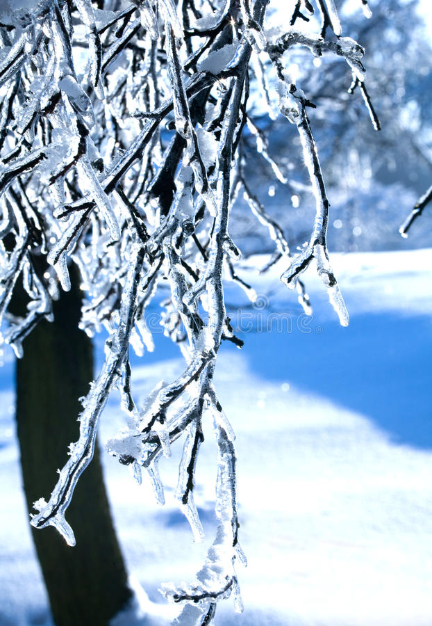 Frozen branch - ice stock image. Image of leaf, freeze ...