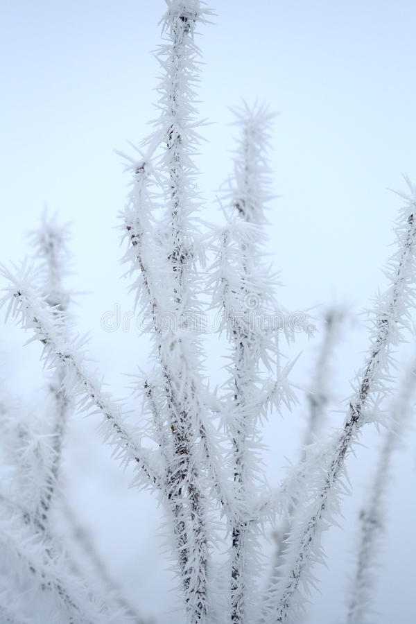 Download Frozen Branch stock photo. Image of outdoor, nature, background - 37558444