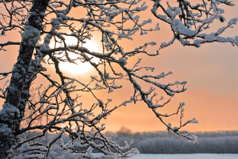 Frozen branch of tree stock images
