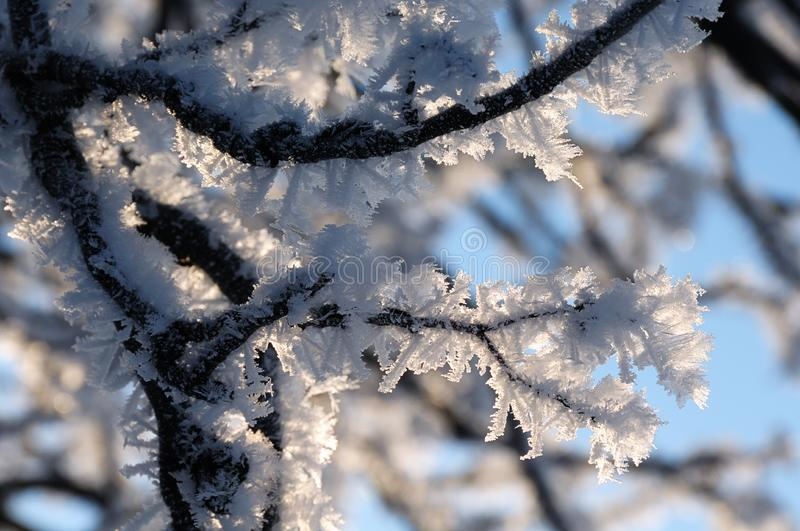 Download Frozen Branches stock image. Image of rhineland, freeze - 7764715