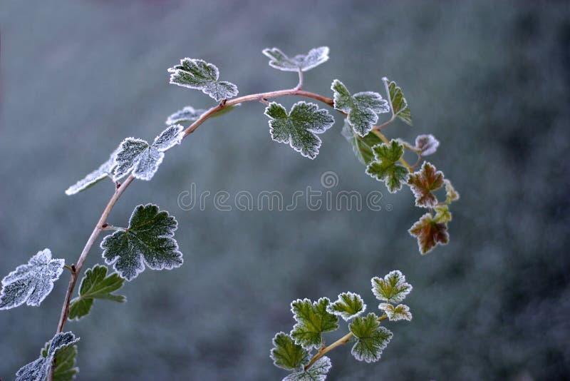 Frozen bush stock photos