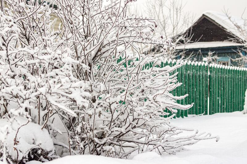 Frozen bush covered with hoarfrost, behind bush green wooden fence under snow and wooden house, snowflakes are falling. Frozen bush covered with hoarfrost royalty free stock images