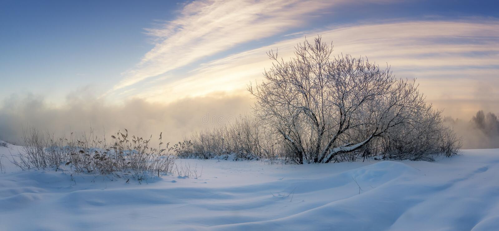 Frozen bushes on the shore of foggy lake in winter, Russia, Ural royalty free stock image