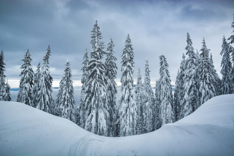 Frozen carpathian forest royalty free stock photography