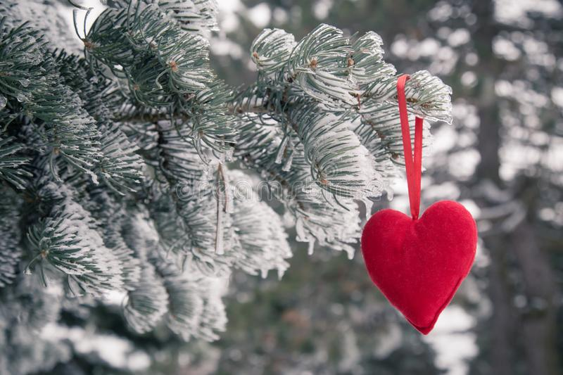 Frozen christmas tree and blurred snow with red heart. Love and. Winter concept royalty free stock photography