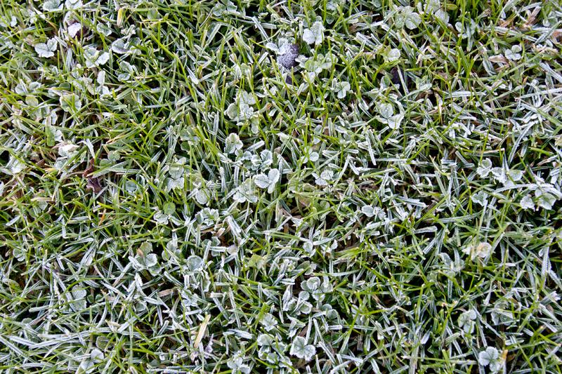 Frozen clover leaves. And grass on a november winter morning royalty free stock images