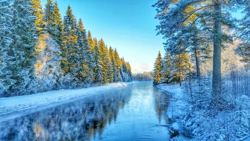 Frozen cold river with snowy forest royalty free stock image