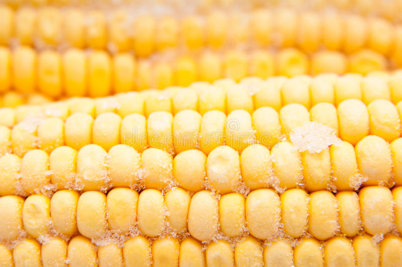 Frozen corn royalty free stock images