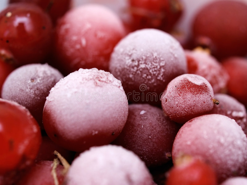 Frozen cranberries. Frozen red cranberries with frosting royalty free stock photography