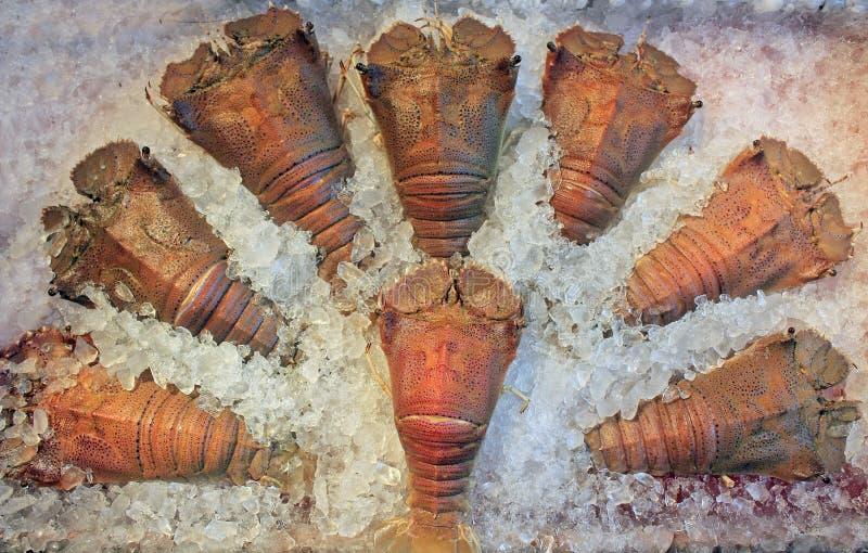Download Frozen crayfish stock image. Image of astacoidea, creature - 18691371