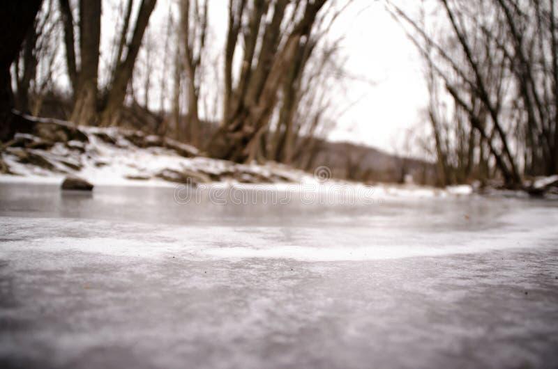 Frozen Creek. A frozen creek in a forest stock photos