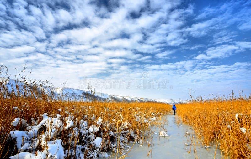 Frozen Delta. Danube Delta frozen in winter time stock photos