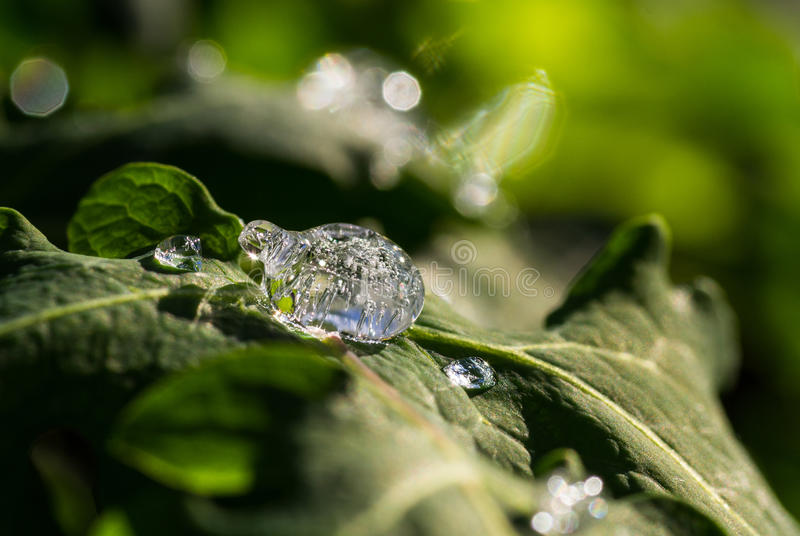 Frozen Dew Drops royalty free stock photos