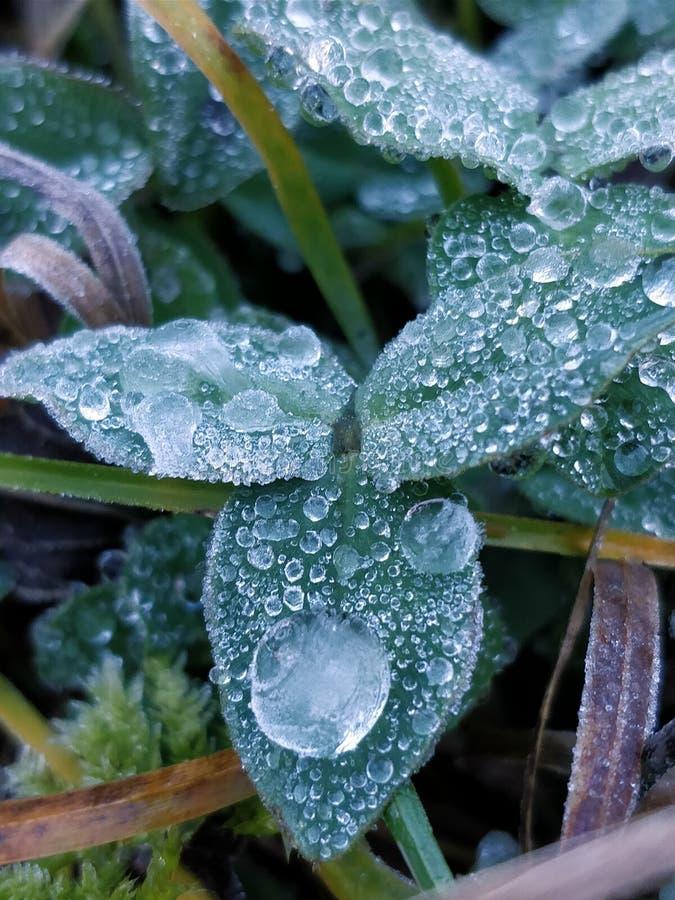 Frozen dew drops on leaf stock photos