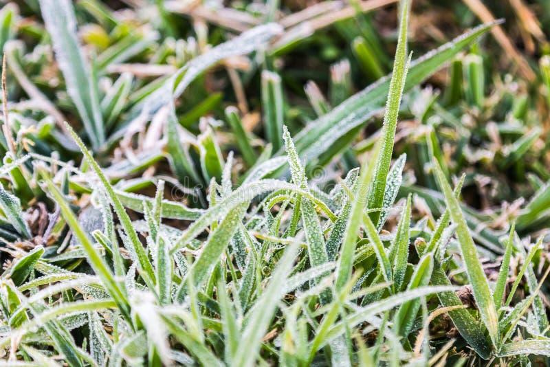 Frozen Dew royalty free stock photo