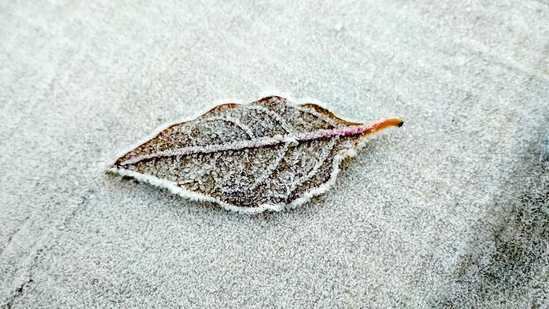 Frozen dew on leaf royalty free stock photo