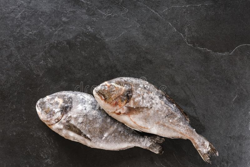 Frozen dorado fish or sea bream on slate stone background. Seafood, top view, flat lay, copy space.  royalty free stock photos