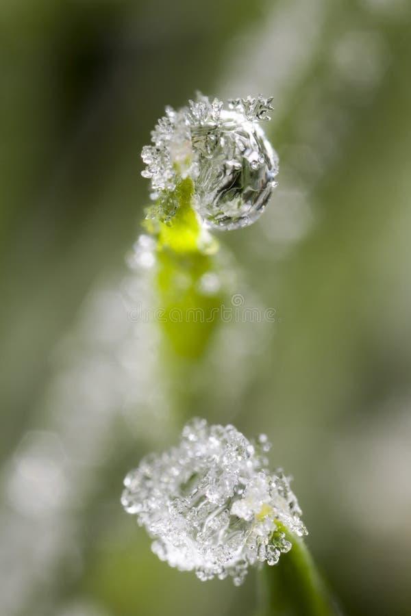 Frozen drew drops stock photo