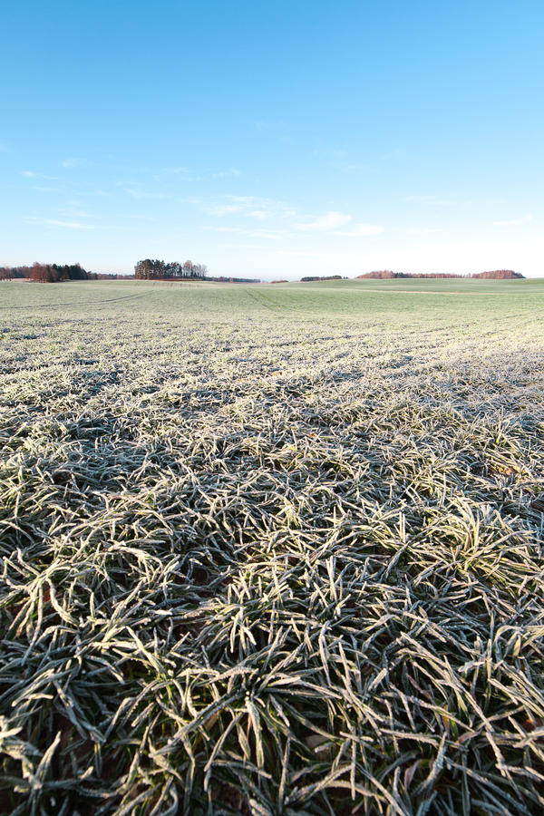 Free Frozen Field. Royalty Free Stock Images - 28562109