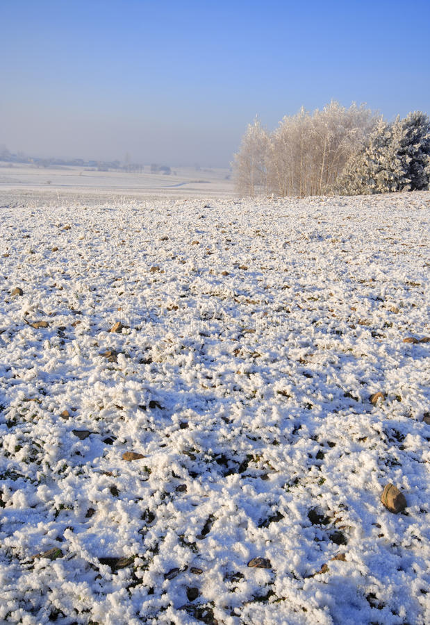 Download Frozen fields and meadows stock photo. Image of cross - 25405174