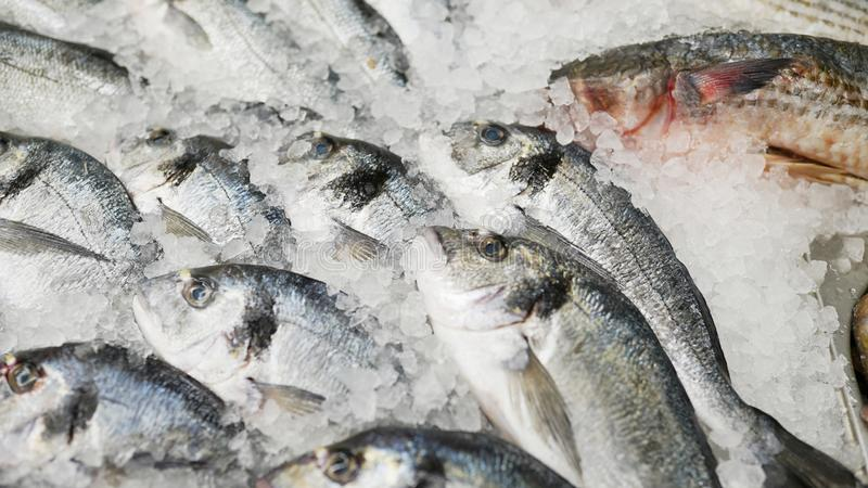 Frozen fish. Fresh fish on ice sale in market. sea food in supermarket . store background.  royalty free stock photo